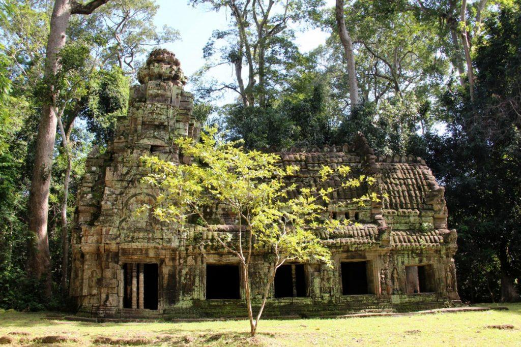 Angkor-Wat-Tomb-tempio-vegetazione
