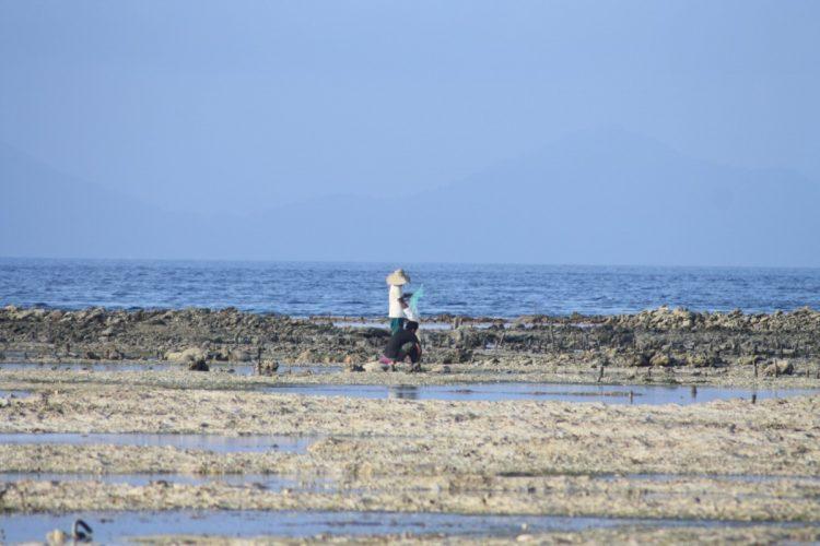Bali-Nusa-Lembongan-spiaggia-alghe