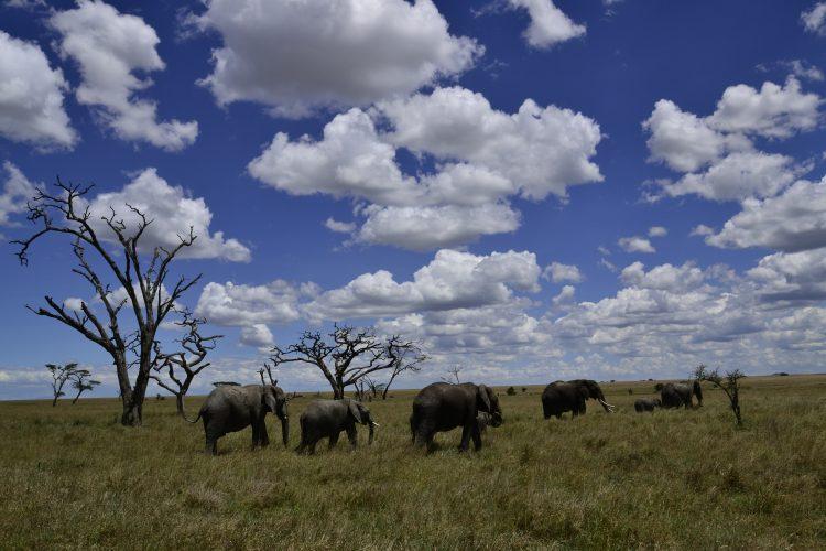 Safari - Africa 2013