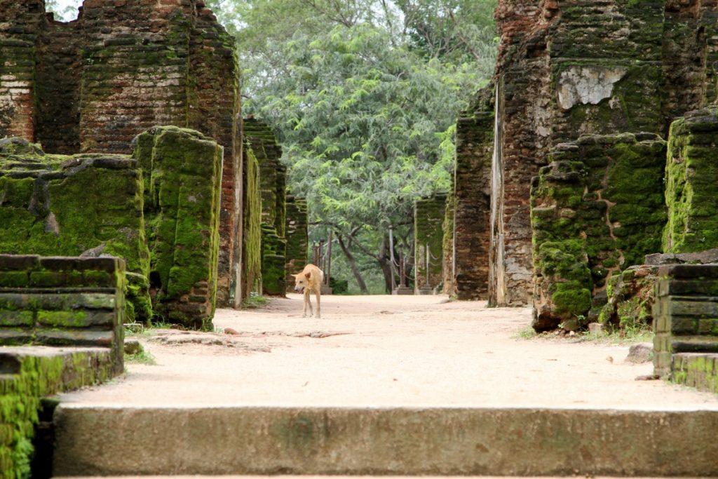 cosa-vedere-in-sri-lanka-itinerario-di-viaggio