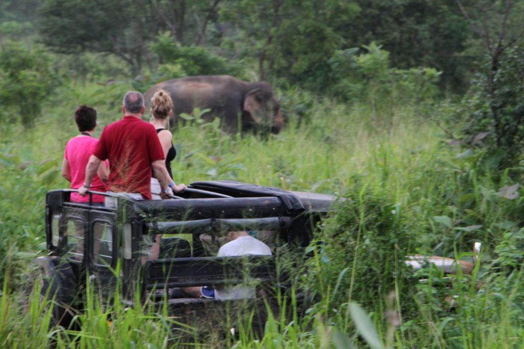 cosa-vedere-in-sri-lanka-itinerario-di-viaggio-kaudulla-safari