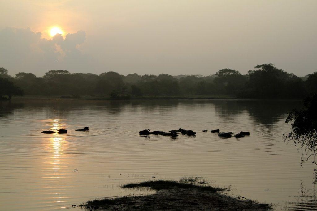 cosa-vedere-in-sri-lanka-itinerario-di-viaggio-yala-park