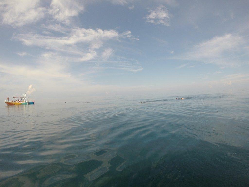 escursione-squalo-balena-mare-holbox