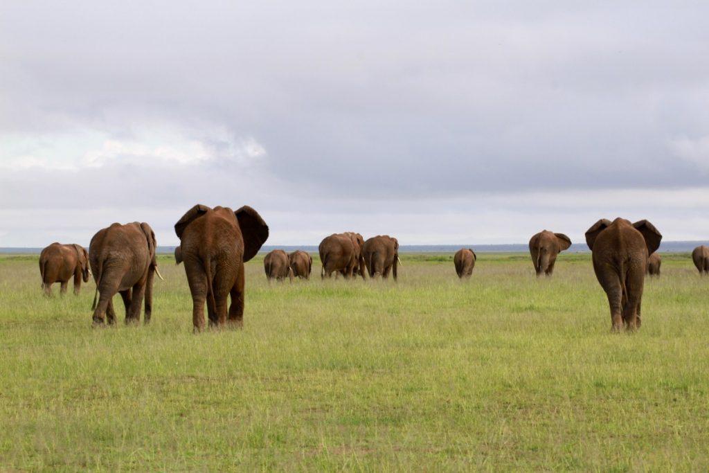 itinerario-safari-kenya-amboseli-national-park