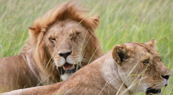 itinerario-safari-kenya-amboselii-national-park