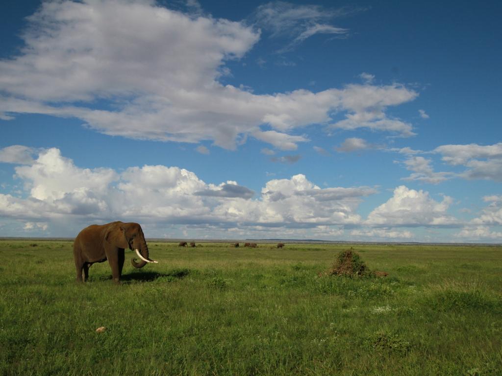 safari-kenya-come-organizzare
