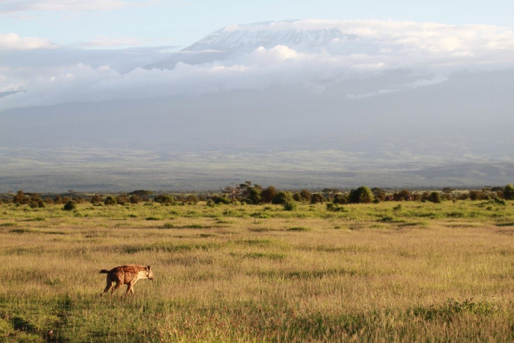 safari-kenya-come-organizzare-kilimangiaro-iena