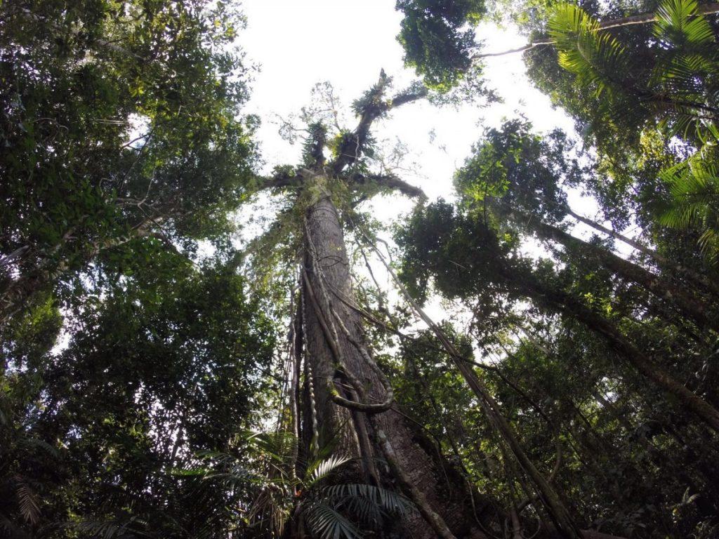 Colombia-cosa-vedere-turismo-foresta-amazzonica