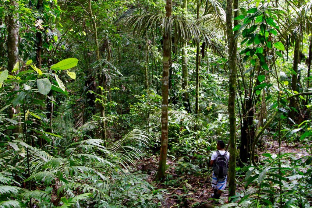 come visitare amazzonia esplorazione della selva a piedi