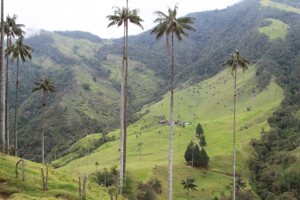 eje-cafetero-colombia-turismo-la-valle-cocora