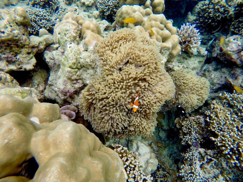 mare-in-thailandia-dicembre-surin-island-nemo