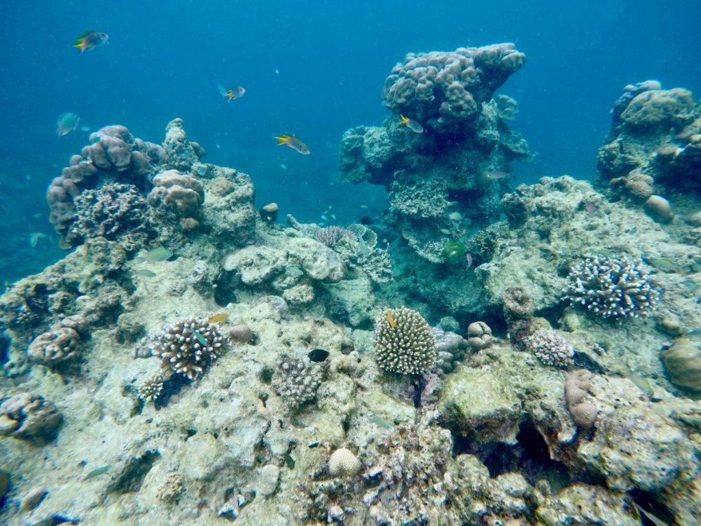 mare-in-thailandia-dicembre-surin-island-snorkeling