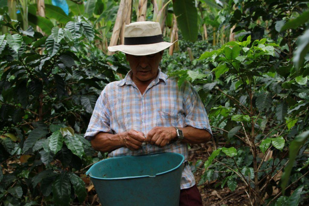 sette-cose-da-fare-in-colombia-eje-cafetero