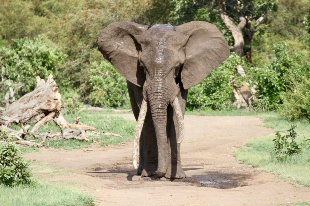 safari-al-parco-kruger-sudafrica-consigli-utili-elefante