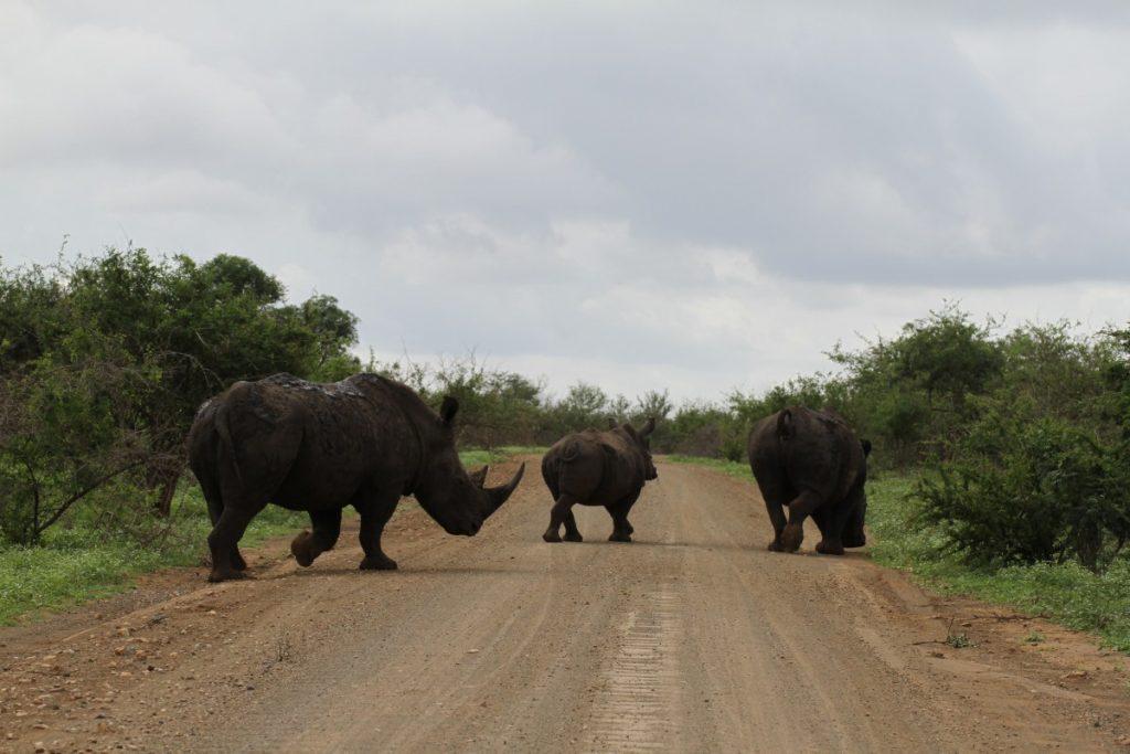 Sudafrica safari al parco kruger come organizzarlo for Costo di raccordo della cabina di log