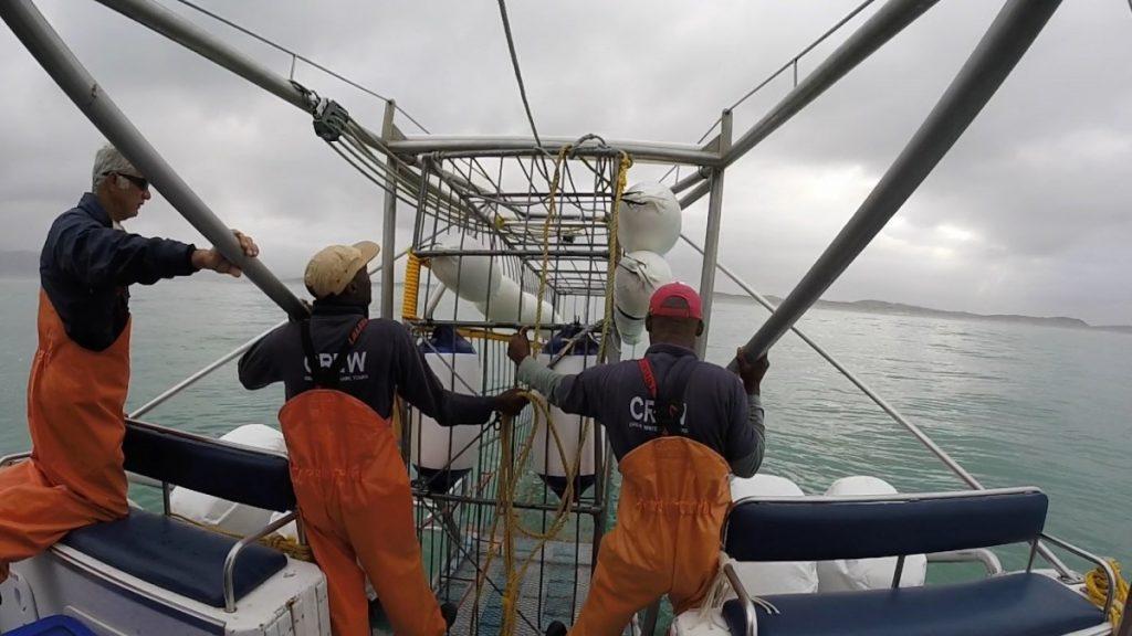 immersione-squalo-bianco-sudafrica-cosa-bisogna-sapere-gabbia
