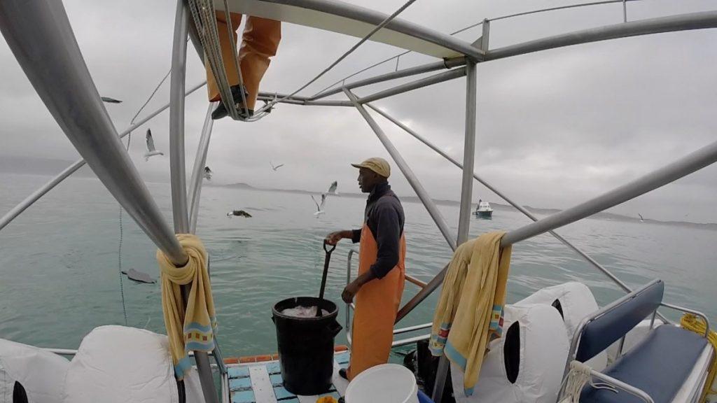 immersione-squalo-bianco-sudafrica-cosa-bisogna-sapere-squalo-cham