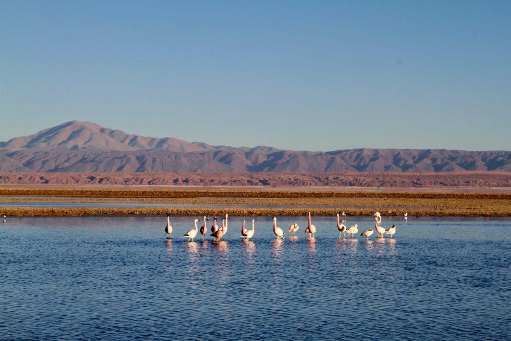 viaggio-in-cile-itinerario-di-10-giorni-flamingo-lago