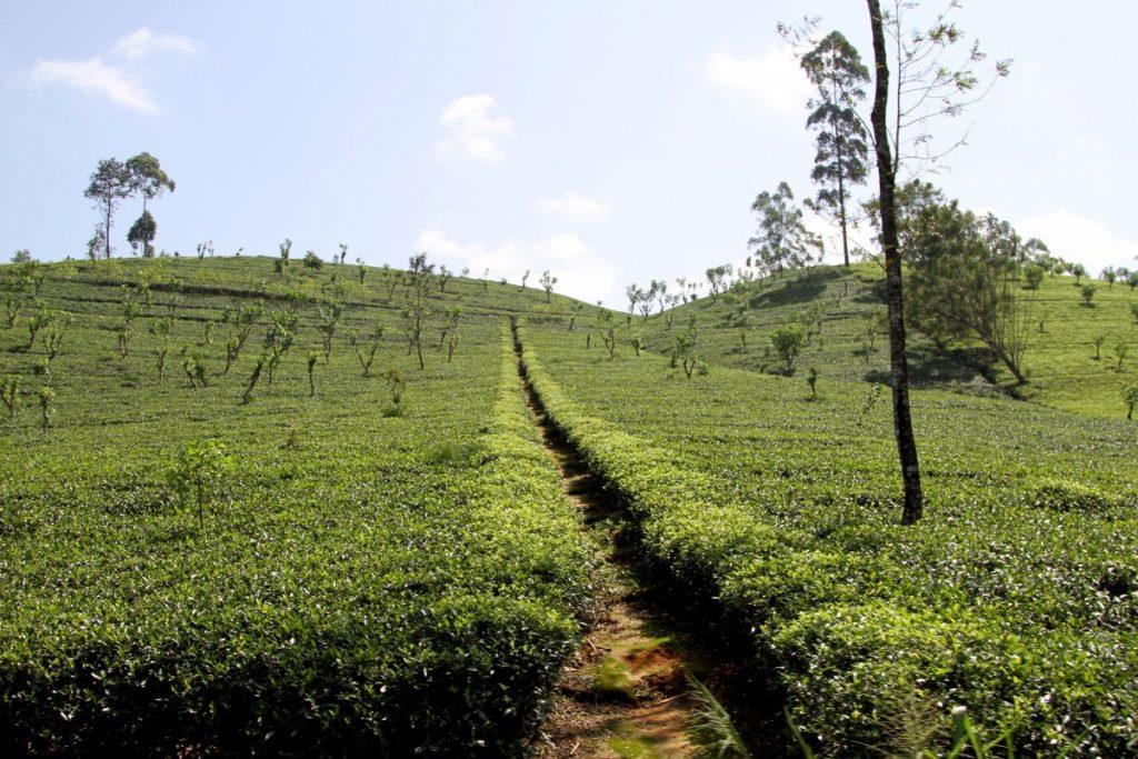 5-mete-per-un-capodanno-esotico-ella-srilanka-tea-factory
