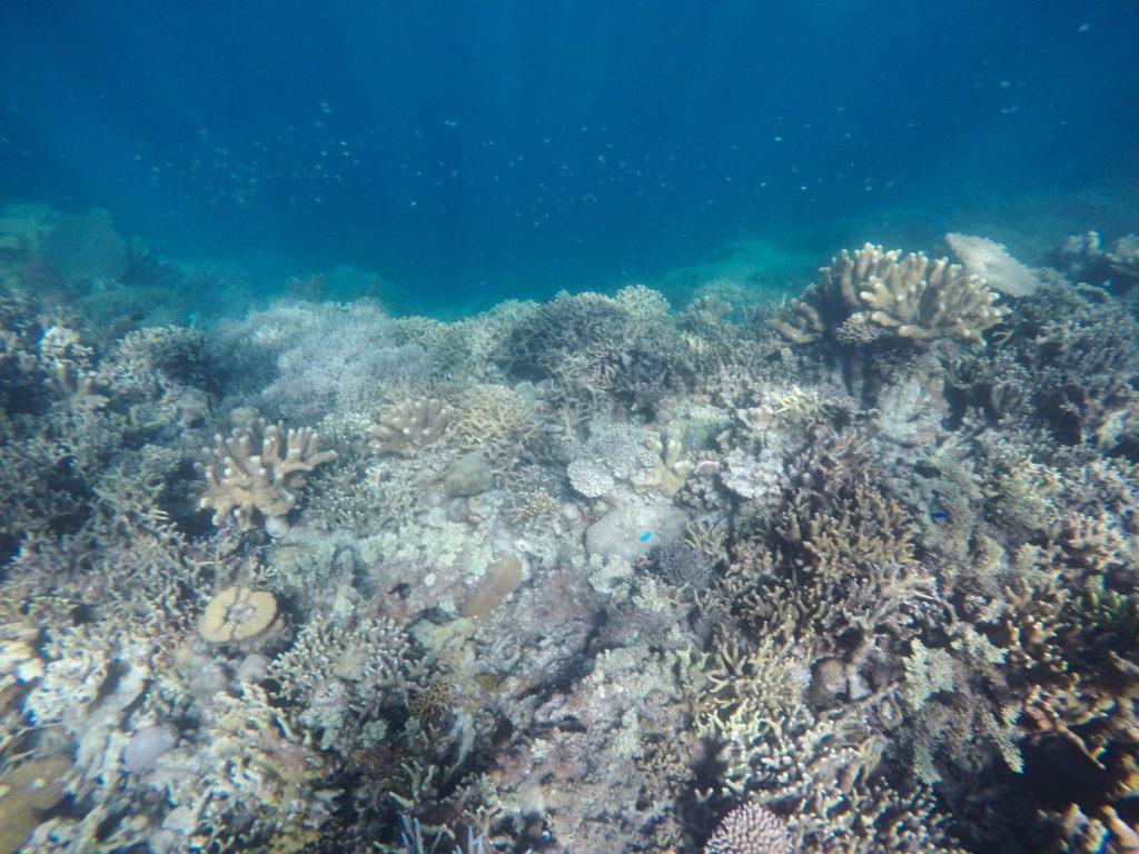 viaggio-filippine-itinerario-consigli-snorkeling-coron