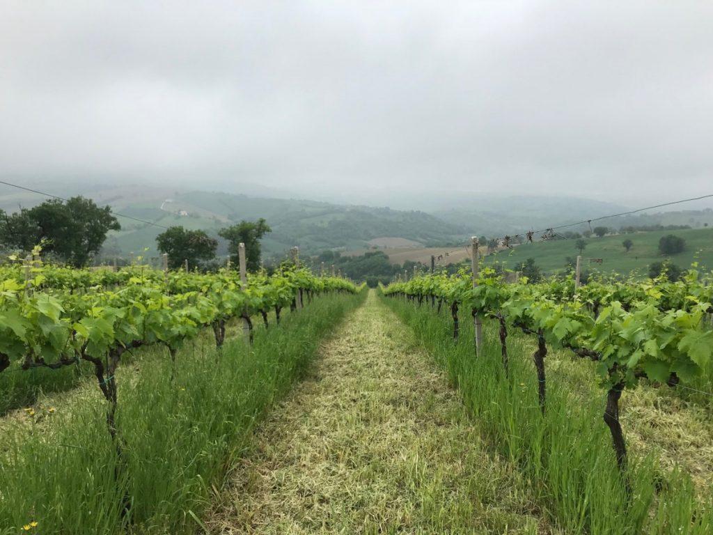 regione-marche-monti-sibillini-dove-cosa-mangiare-agriturismo-villa-le-vigne