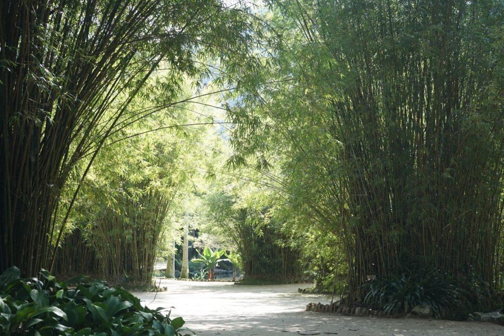 itinerario-viaggio-brasile-guida-completa-jardin-botanico