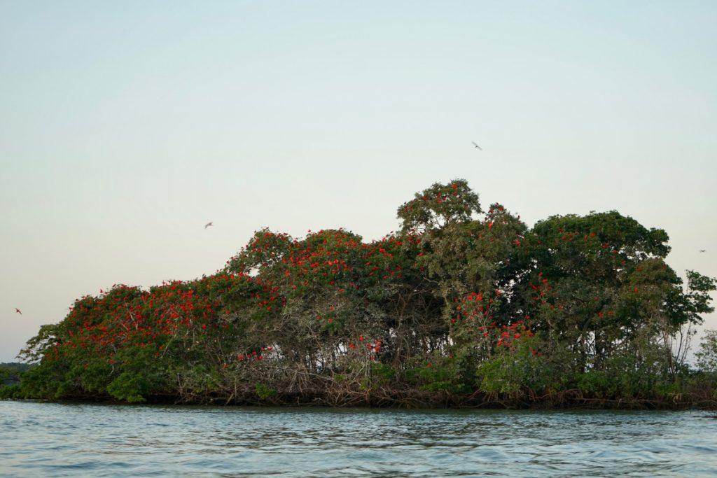 itinerario-viaggio-brasile-guida-completa-migrazione-ibis-scarlatto-parnaiba