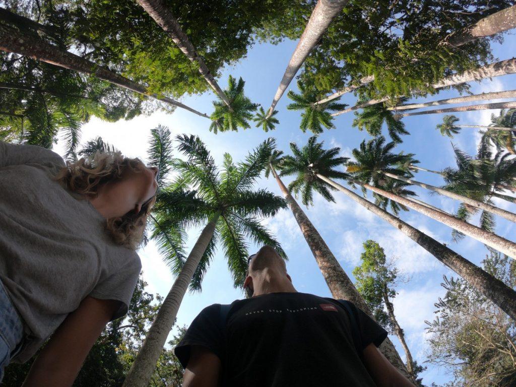 informazioni-pratiche-per-un-viaggio-a-rio-de-janeiro-giardino-botanico