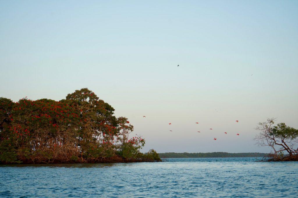 viaggio-in-brasile-itinerario-la-rotta-delle-emozioni-parnaiba-delta