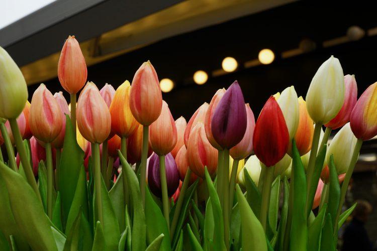 cosa-fare-amsterdam-in-due-giorni-mercato-dei-fiori