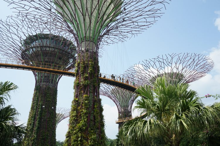 cosa-vedere-e-fare-a-singapore-la-citta-del-futuro-gardens-by-the-bay