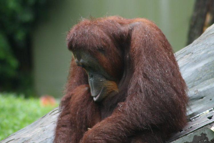 cosa-vedere-e-fare-a-singapore-la-citta-del-futuro-zoo